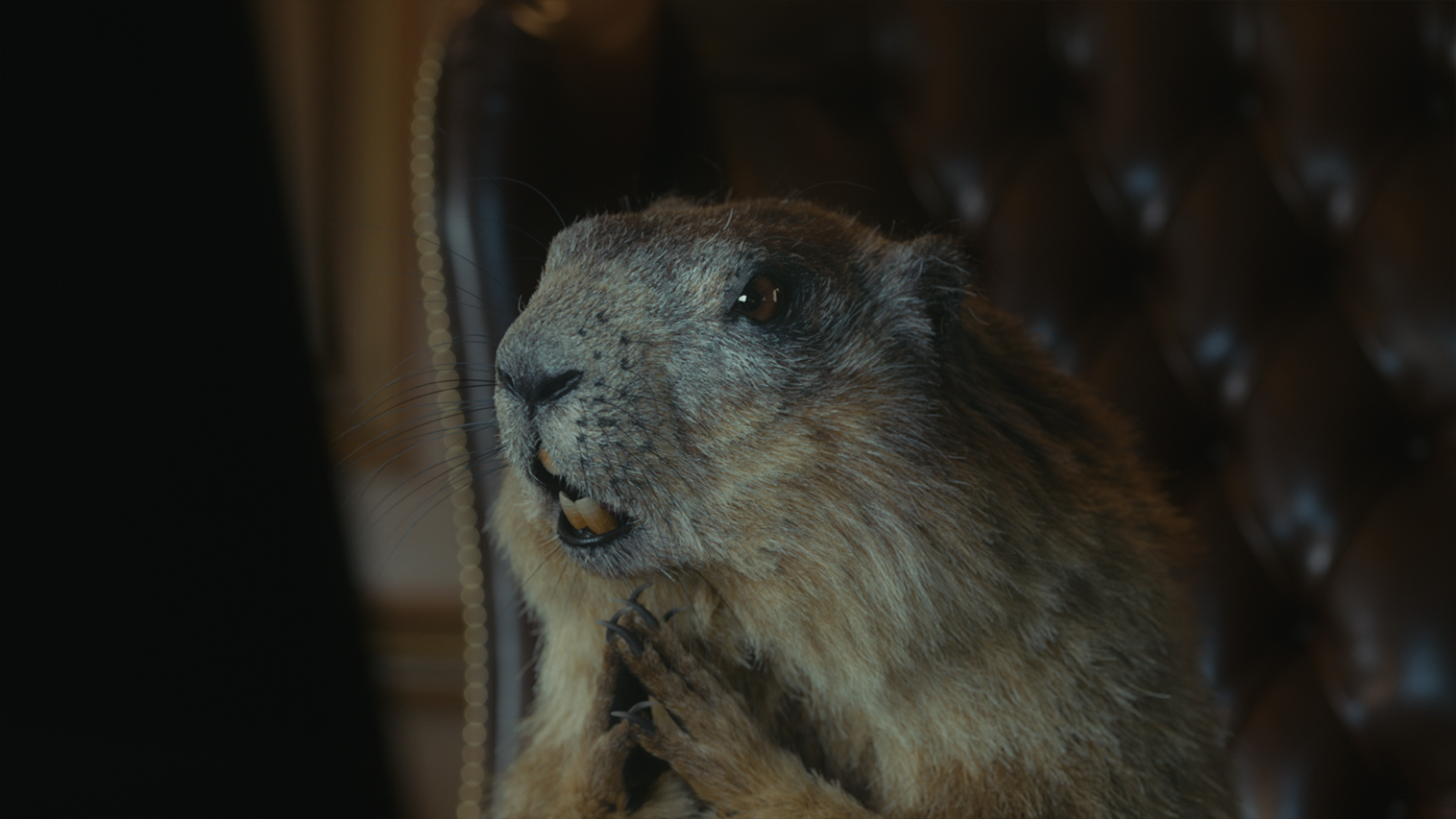 169zkb_marmot_15s_200430.png